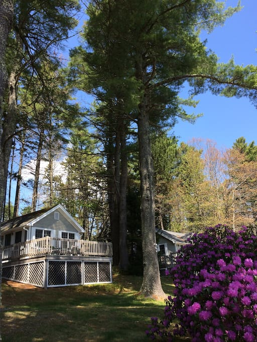 Pine Grove Cottage 7 Guesthouses For Rent In