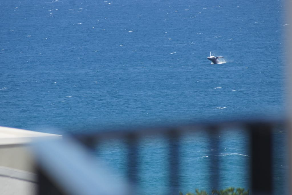 Whales from your balcony.