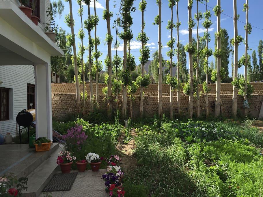 Kithcen Garden during summers!