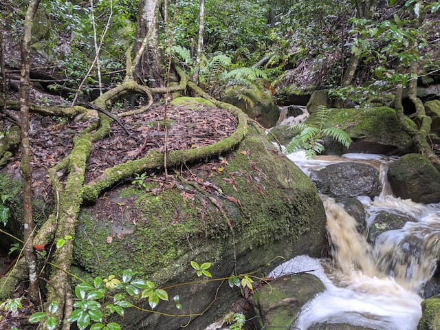Escape to your own private rain forest!