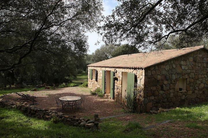 magnifique gîte type bergerie corse dans oliveraie - Sartène