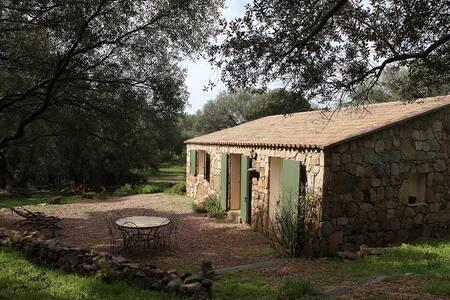 magnifique gîte type bergerie corse dans oliveraie - Sartène - Talo
