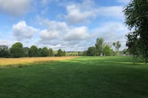Marsh meadows