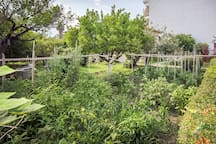 Our vegetable garden that provides fresh fruits and vegetables throughout the year