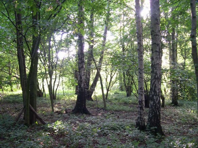 Access to woods when staying with us