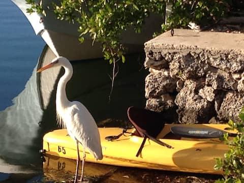 Manatee Cove -Bayside, Key Largo