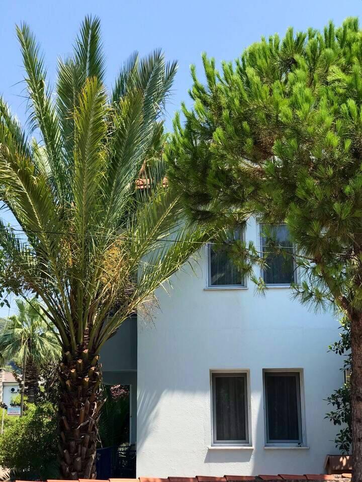 Dalyan Gunaydın House & Apartment