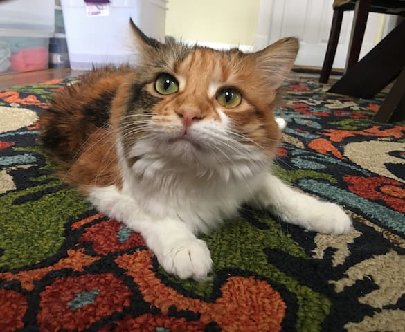 Scarlett is our Host Kitty. She likes to greet all her guests personally.