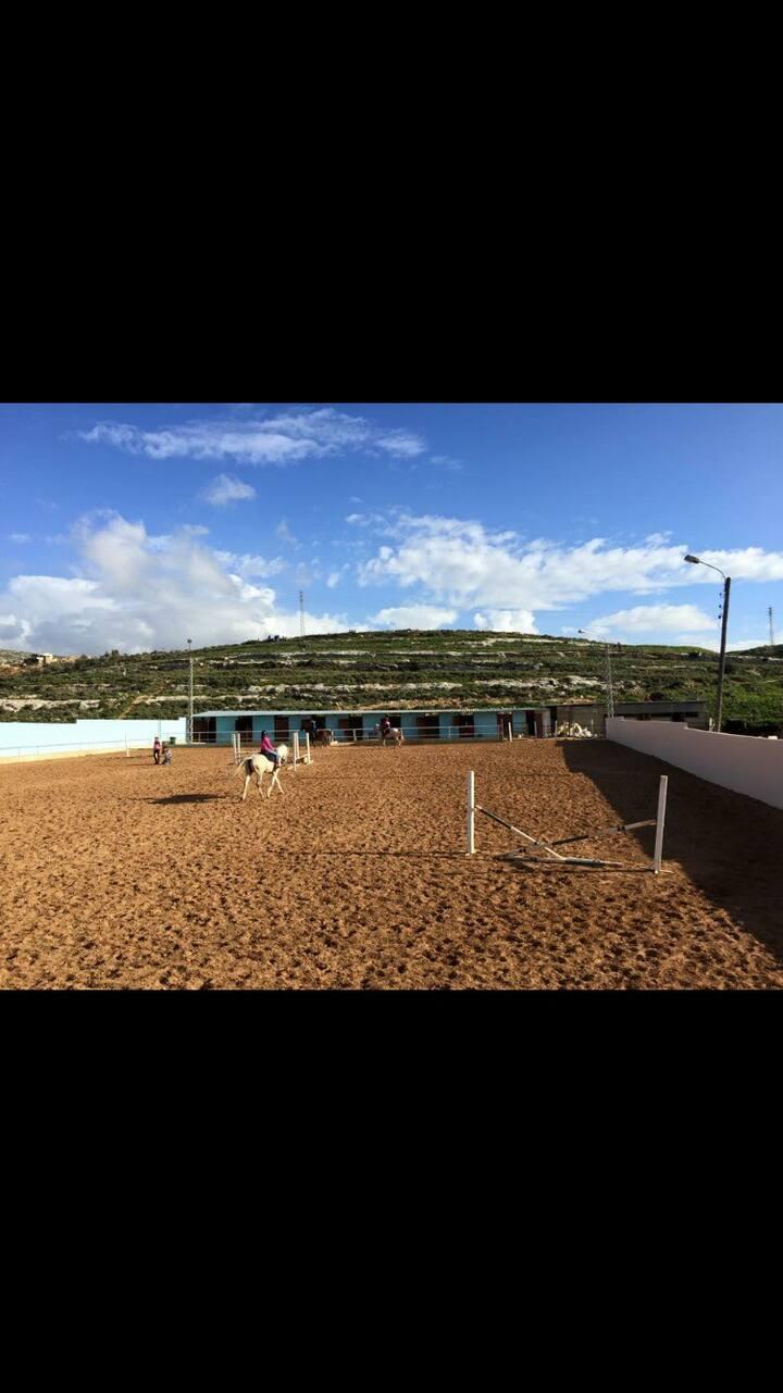 Horse club  sleep learn ride horses