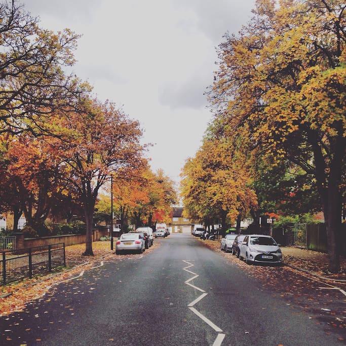 My street during autumn