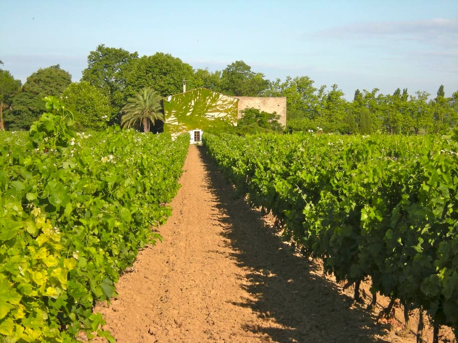 Wijngaard aan Gite