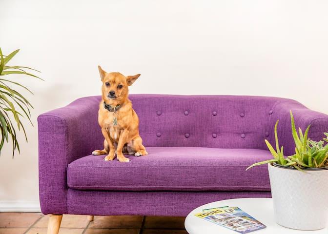 Dog-Friendly + Inclusive Desert Escape