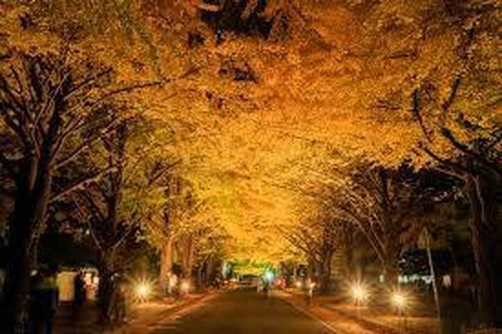 Autum colors in Hokkaido University