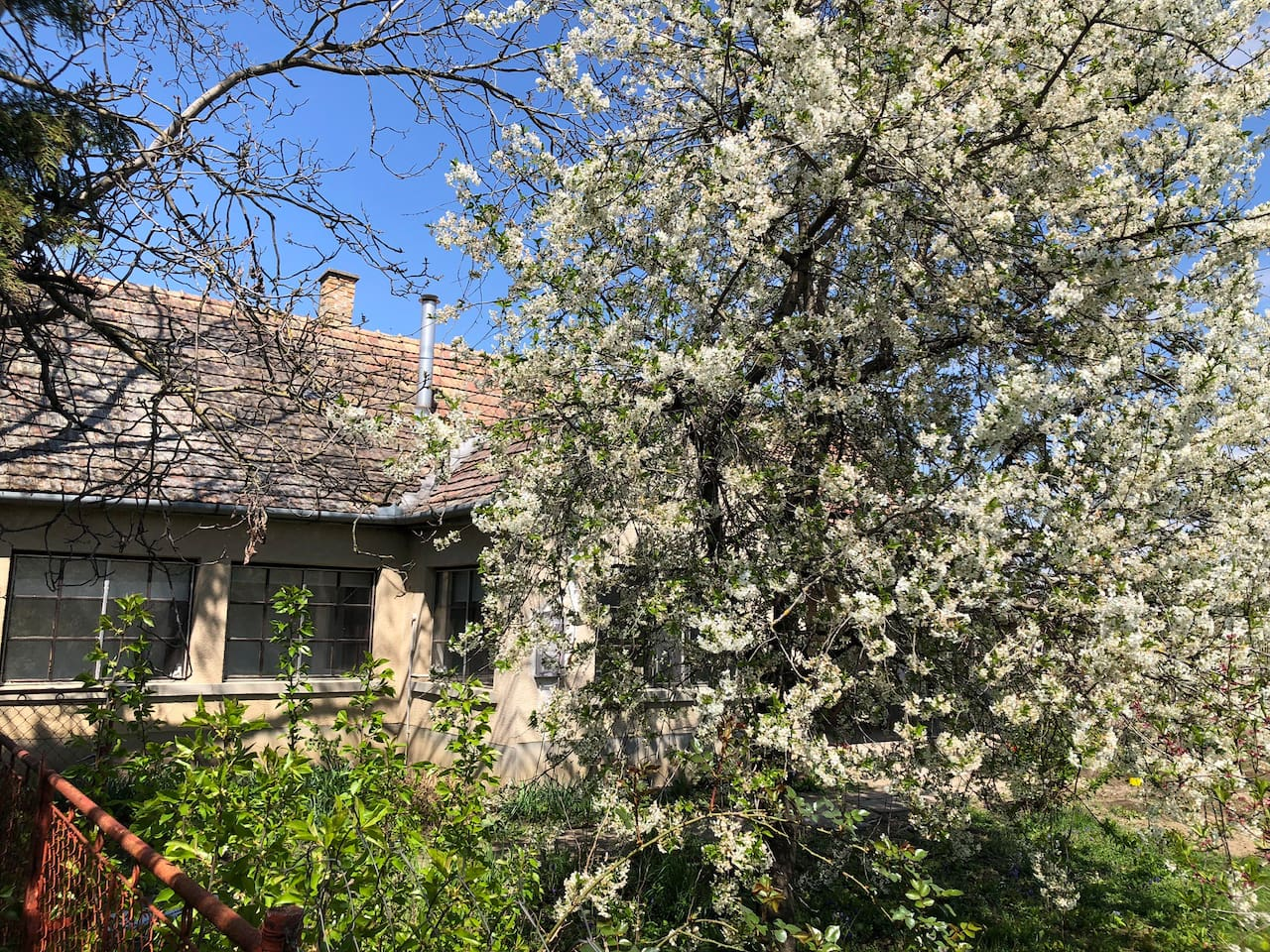 Come enjoy the beautiful blooming trees in the front yard of the cottage!