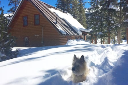 The perfect family friendly cabin in the woods - Breckenridge
