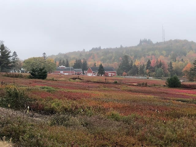 Latham Blueberry Farm for up to 6 guests.
