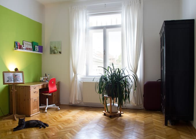 Colorful room for cat lovers