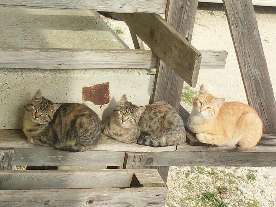 tre gatti e 9 micini