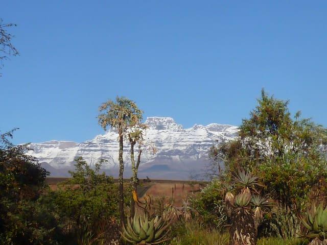 Drakensberg - Dorm Bed