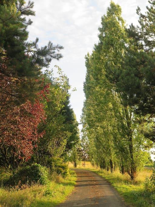 Chemin d'accès à La Censie