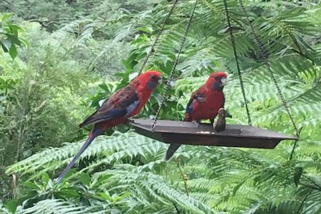 Peaceful rainforest retreat in secluded paradise - Cockatoo - Домик на природе
