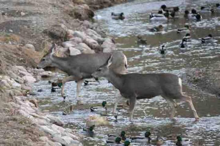 Aspen Creek