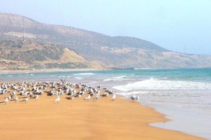 la plage absolue et la tranquillité bleue