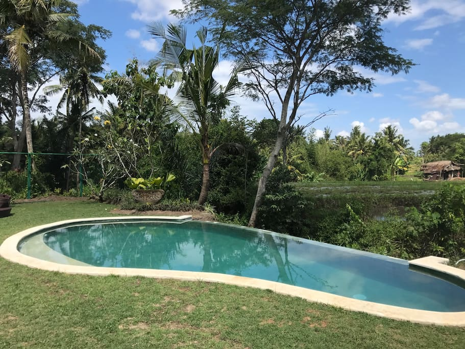 Beautiful private pool overlooking rice field.