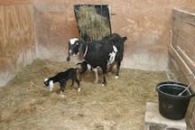 Goat kids are usually born the end of April into early May