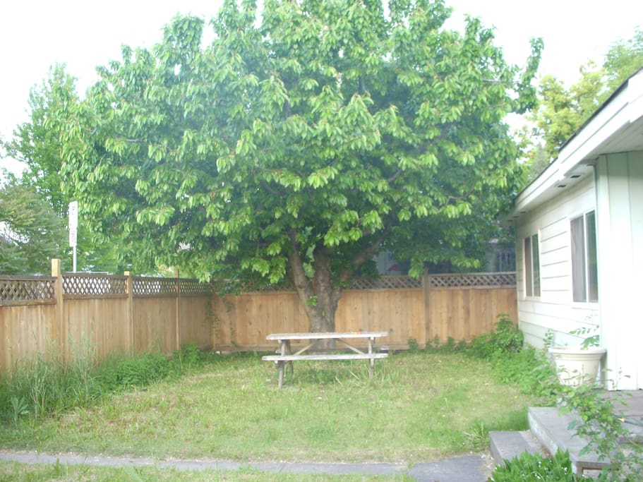 Outdoor picnic table under producing cherry tree.