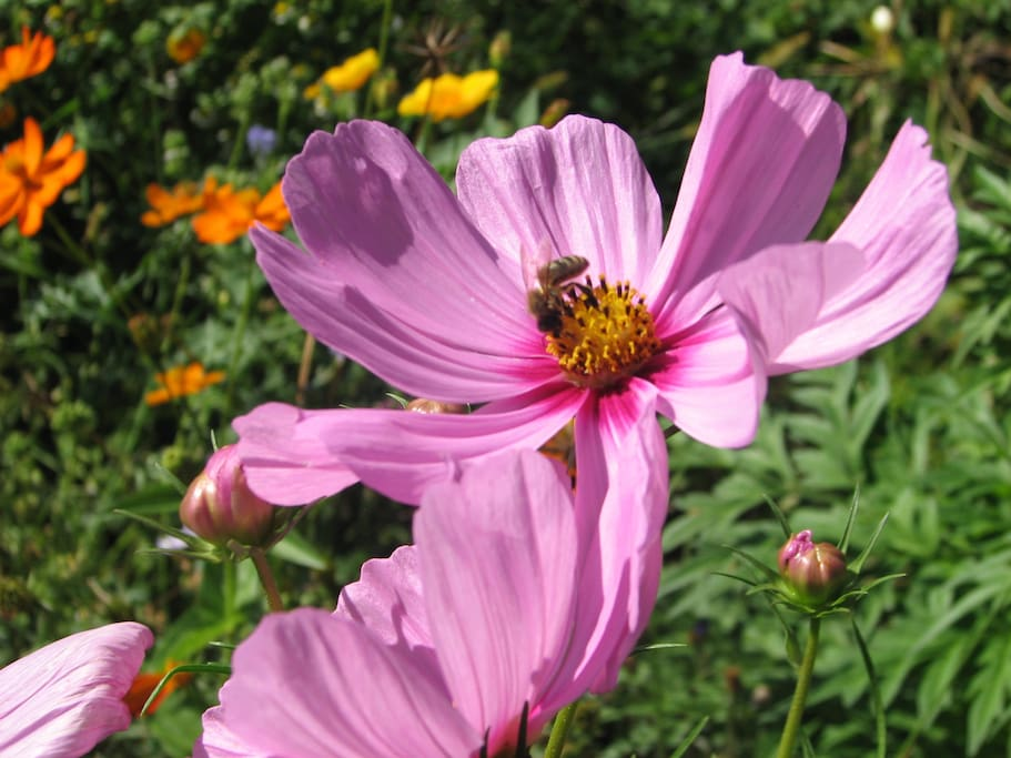 zwischen 15-25 Bienenvölker