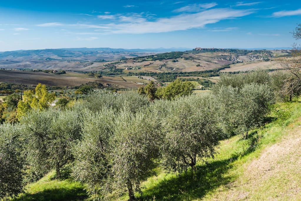 Panorama on the Cortona valley