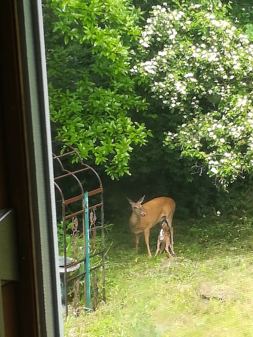 The view out the kitchen window recently.