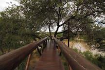 Walkway to tree deck