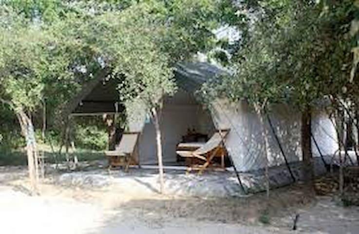 Camping at Yala National Park - Tissamaharama - Tent