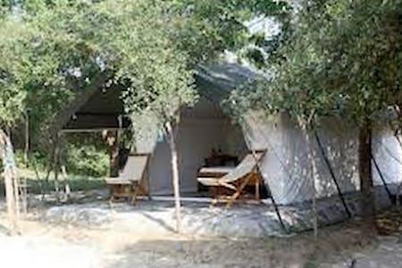 Camping at Yala National Park - Tissamaharama