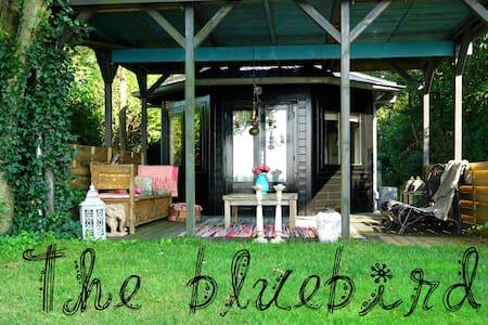 """Sfeervol vakantiehuis """"The Bluebird"""" - IJsselmuiden - Bungaló"""