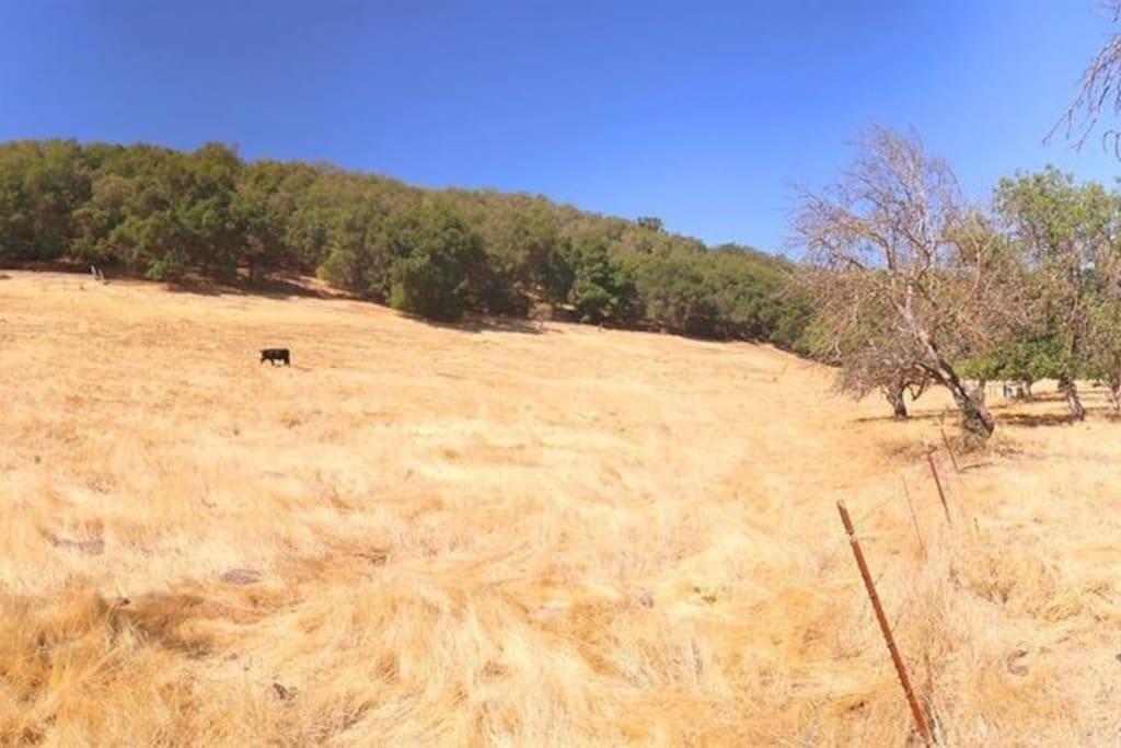 Cattle pasture with Black Angus