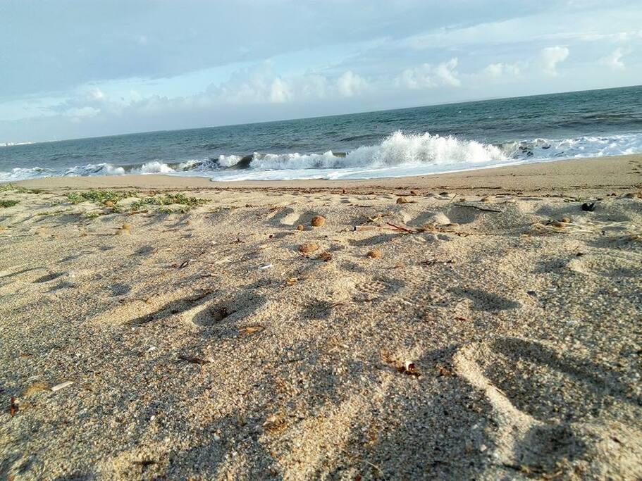 Spiaggia/beach