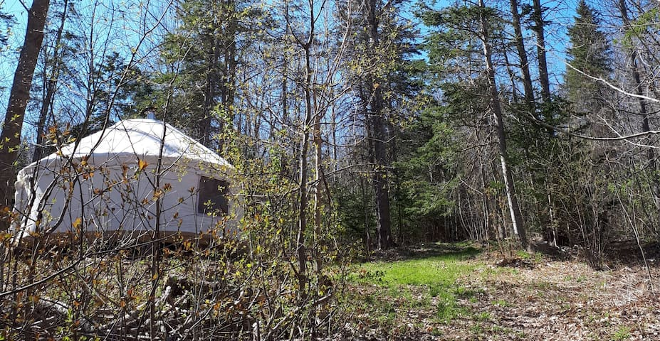 Hand-Crafted Woodland Yurt