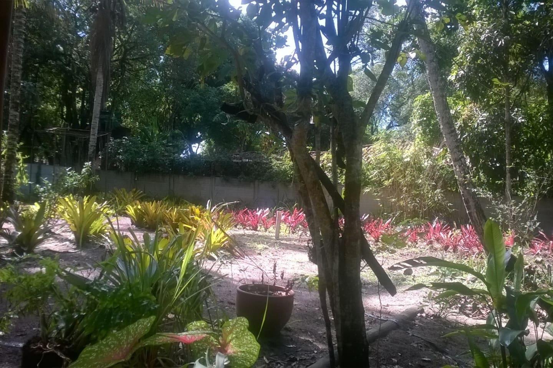 Jardim de bromélias.