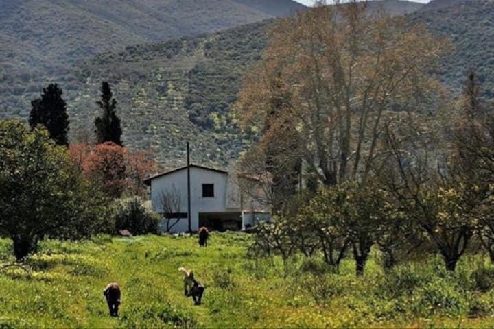 Farm house (5 km from Poros - Galatas, Trizinias