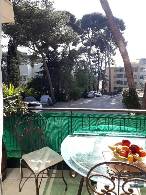 terrasse donnant sur pins parasol