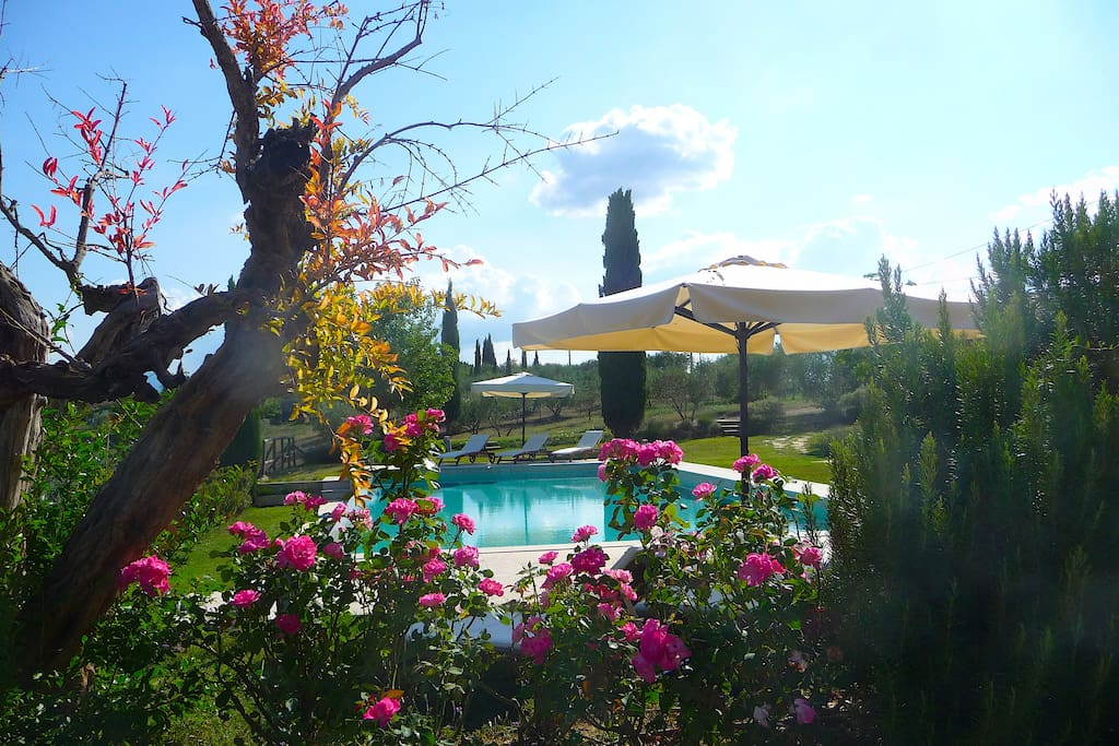 Garden and infinity pool