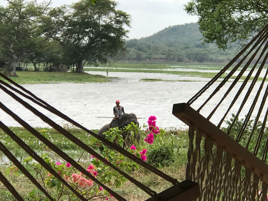 You have a view of Habarana Lake from your hammock