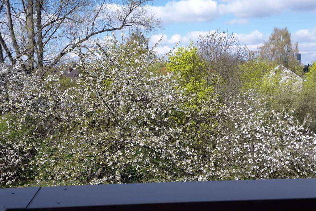 Ausblick vom Balkon ins Grüne