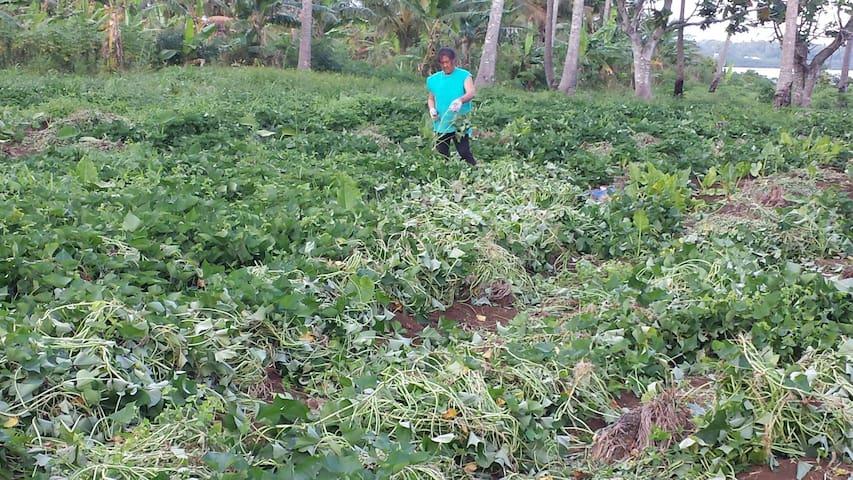 Tongan paradise