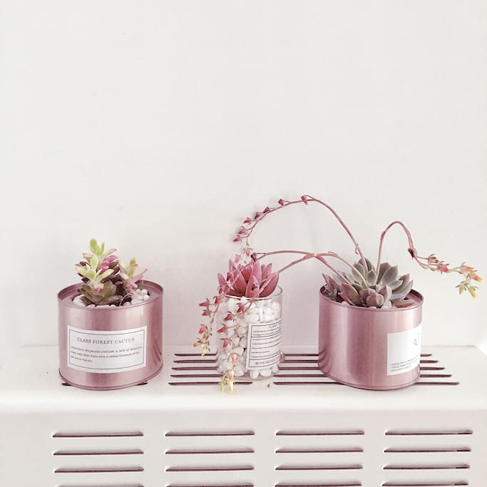 门厅小植物