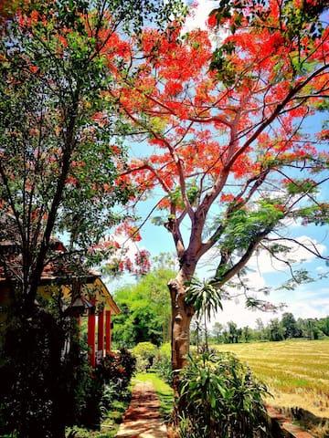 泰国/清迈/稻田景观/兰纳花园/独栋别墅/两卧室/两厅/两卫生间/居家休闲/安全舒适的环境/