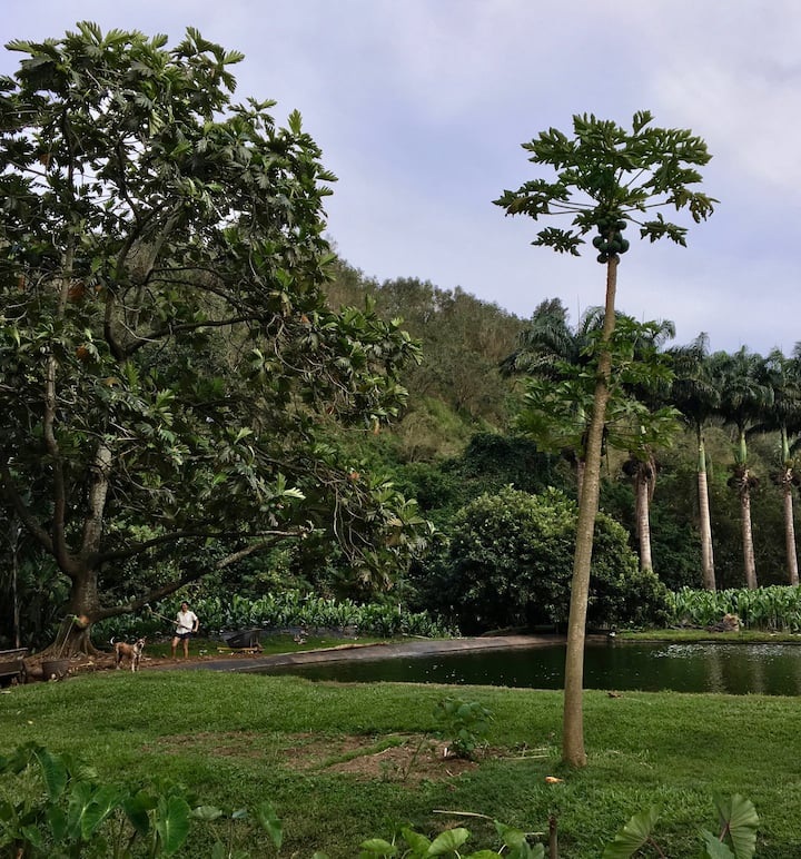 See fruit trees and aquaculture